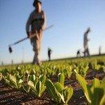 Locuri de muncă în Europa: locuri limitate pentru recoltarea căpșunilor