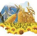 CUM ARATĂ AGRICULTURA ROMÂNEASCĂ?