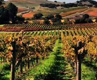 california dreaming, wines & (wet) dreams,vin,degustare de vinuri,vinuri americane,napa valley,vinuri rosii,exporturi americane